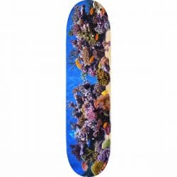 Planche de Skateboard Mini Logo Fish Tank 18 deck 8.5″